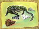 krokodil met schelpen web